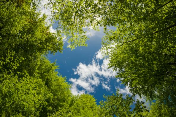 Jungle sky GALLERY >