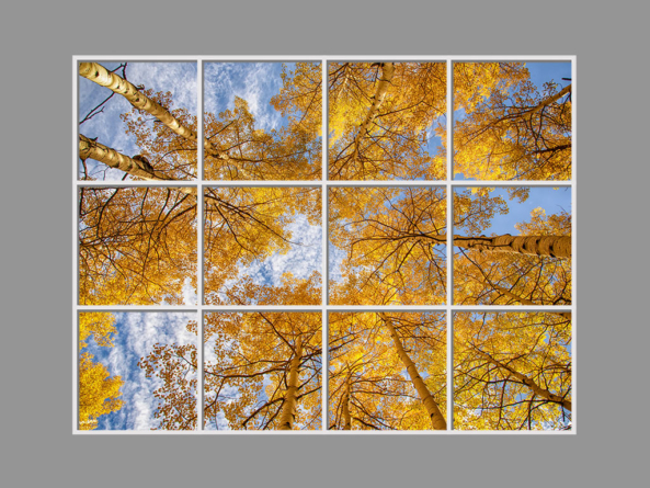 Perspective trees  GALLERY >