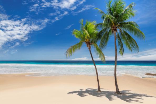 Seascapes and tropics